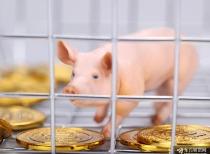 唐人神去年養一頭豬賺千元 飼料業務毛利率連年下滑