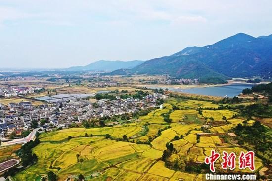 中央农村工作会议定调2020年农业农村三大工作