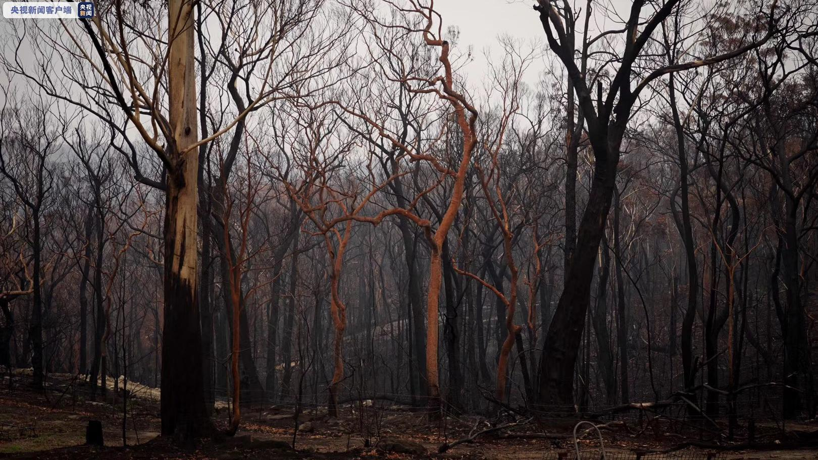 澳大利亚两大世界遗产区过半面积被烧毁 桉树数量或将崩溃