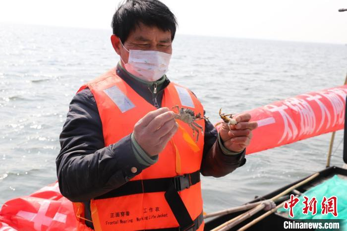 太湖水域生态恢复状况良好 2020年大闸蟹产量预计达450吨