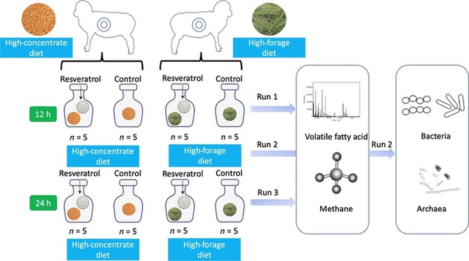环保又健康 植物提取物可调控畜牧养殖业甲烷排放