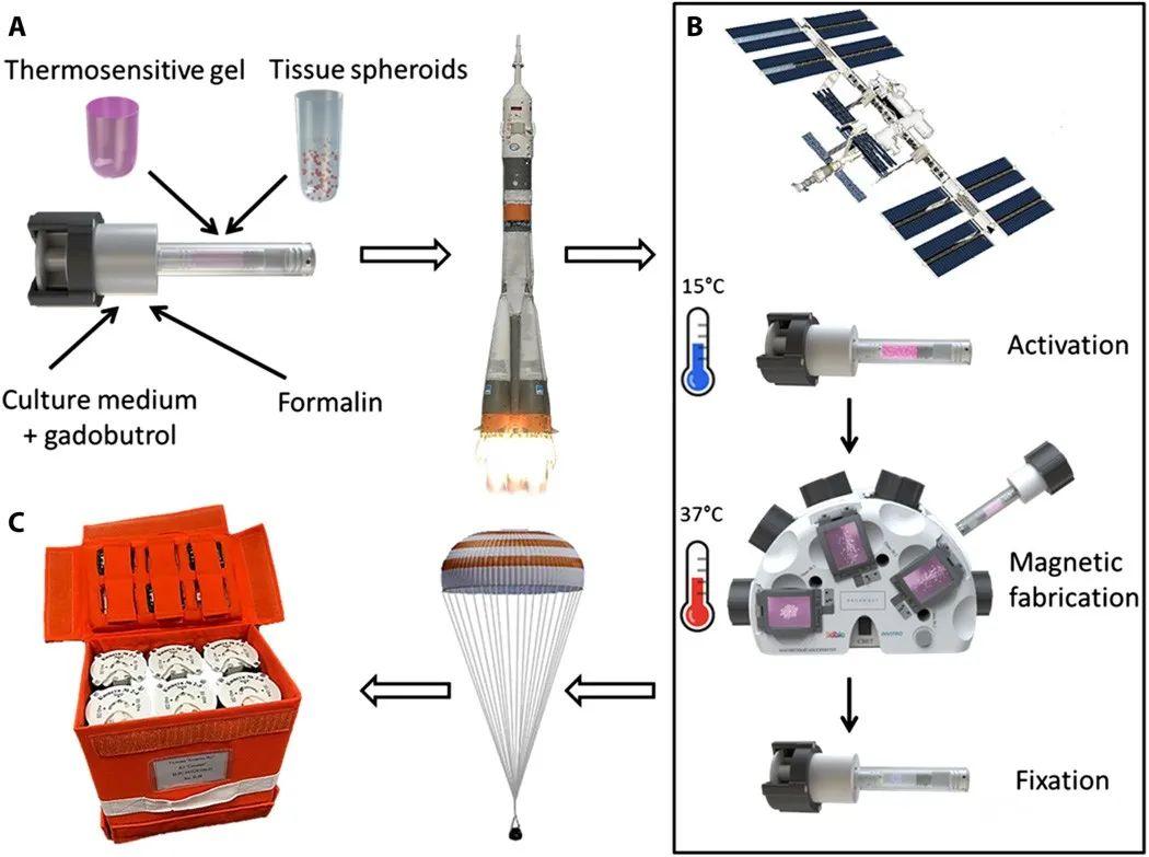 俄罗斯宇航员在太空中3D打印出柔骨机关