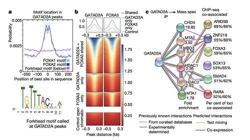 超百万人类与小鼠调控基因元件公布,基因组结构和功能将有全新认知|总编辑圈点