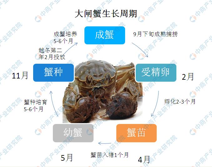 2020年大闸蟹行业市场规模及产业布局情况分析(图)