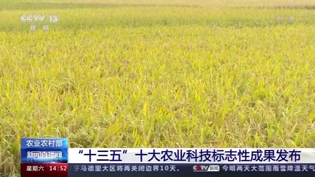 """""""十三五""""十大农业科技标志性成果发布 超级稻、禽流感疫苗等上榜"""