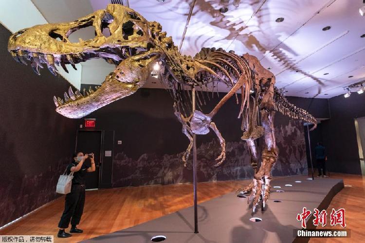 """全球最大霸王龙化石之一拍出1.87亿""""天价"""""""