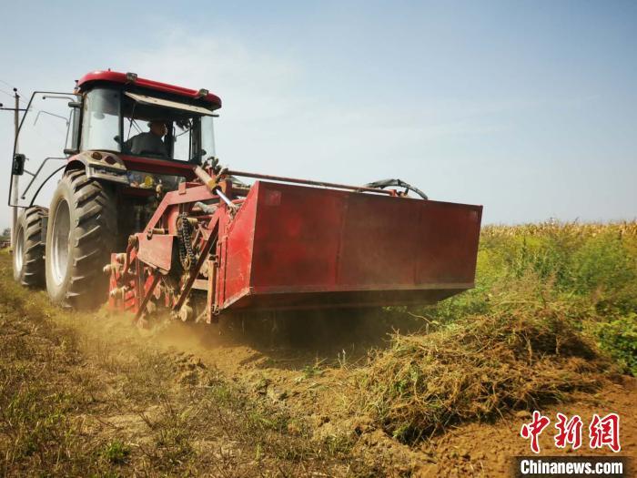 大型机械助力道地药材收割,大幅提升了作业效率。