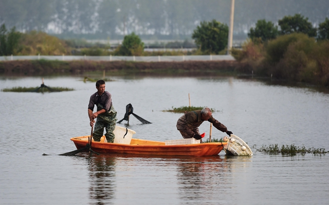 安徽五河县沱湖乡大岗村螃蟹养殖基地,当地农户在捕捞螃蟹。新华社图