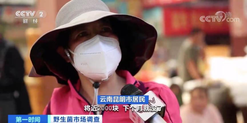 云南雨季结束野生菌价格上涨 交易仍持续火爆