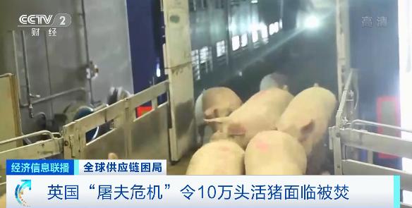 美国肯德基无鸡可炸是啥情况?9月用工荒冲击全球食品产业链?
