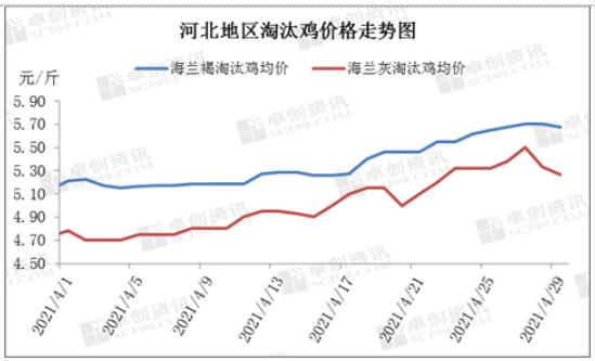 卓创资讯:4月份河北省蛋鸡市场概述