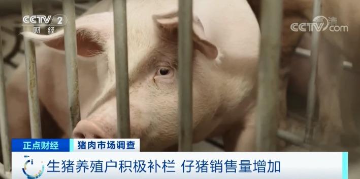 "usdt法币交易api(www.caibao.it):跌破15元/斤!猪肉价钱坐""滑梯""!养猪还赚钱吗? 第4张"