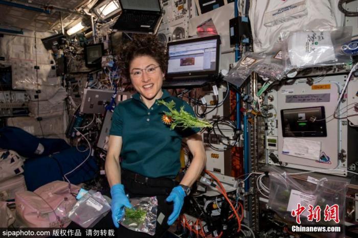 俄正开发机器人化温室在太空种粮 冀烤出首个太空面包!